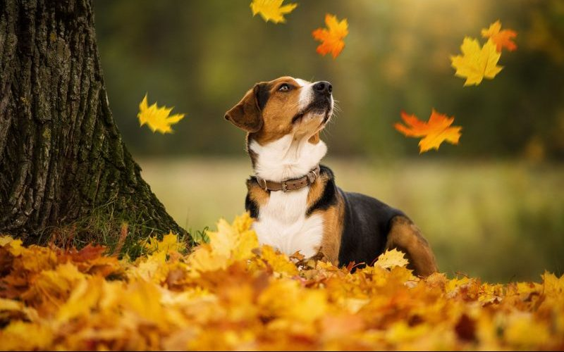 Herbstdünger